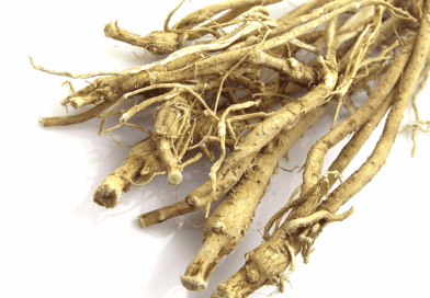 Astragalus Roots for Better Immune System and Energy