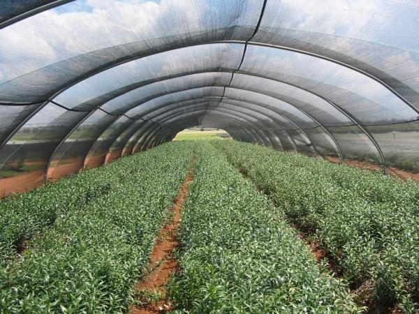 Agricultural Netting
