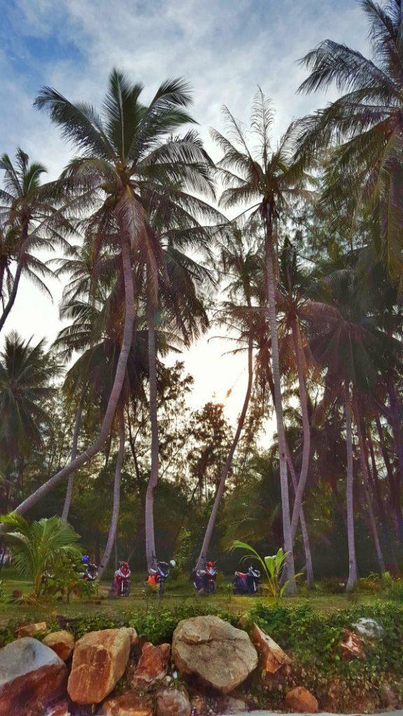 Hier fährt man immer Moped und parkt auch an den exotischsten Stellen einfach mal unter Palmen.