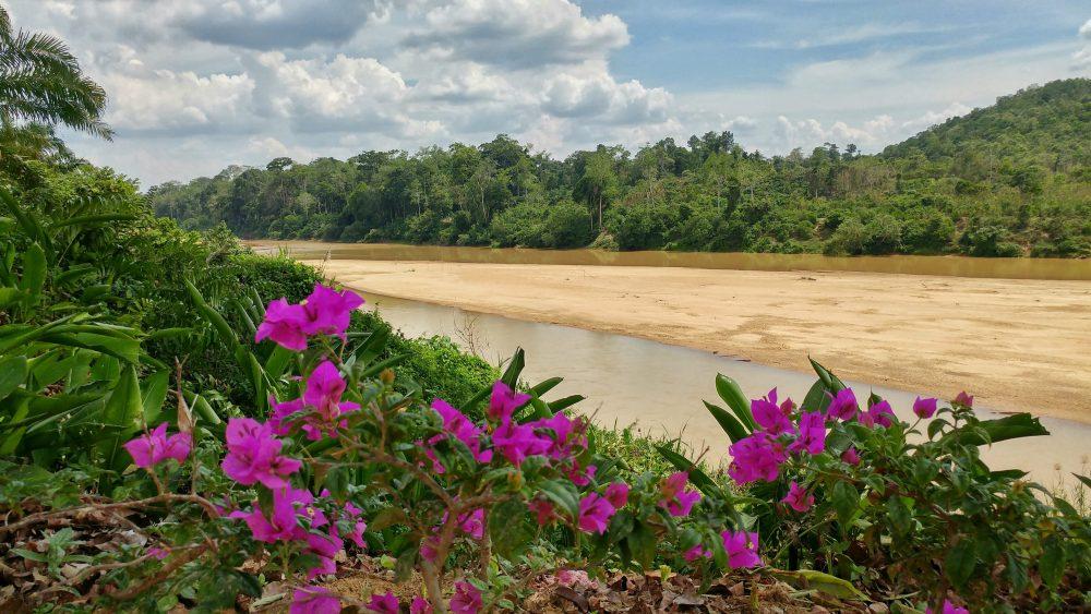 Heute geht es in den nördlichen Taman Negara National Park. Hier geht es für mich auch zum ersten Mal in den Regenwald. Deutlich steigen nun die Temperaturen und die Luftfeuchtigkeit.