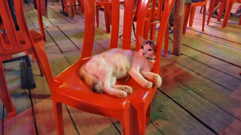 Diese Katze war hartnäckig. Sie wollte immer wieder und wieder den gleichen Stuhl besetzen, aber nur dann, wenn sie sah, dass sich jemand auf den Stuhl setzen wollte. Davor war der Stuhl noch nicht interessant… immer erst, wenn sie jemanden kommen sah, der genau ihren Stuhl wollte. Dann sprang sie sofort drauf und wirkte sehr,  sehr böse. Böse Miezekatze!!