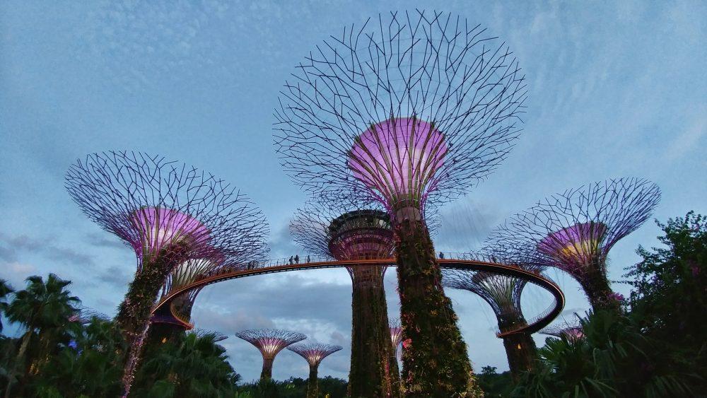 Ein Ticket für den Skyway kostet  8 Singapur Dollar. Ich glaube, das sind ca. 5-6 Euro.