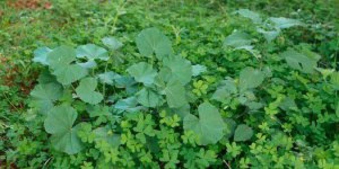 Φυσικοί τρόποι για την αντιμετώπιση ανεπιθύμητων αγριόχορτων (ζιζάνια) στον κήπο