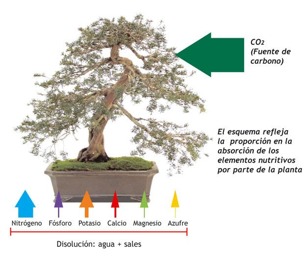 Resultado de imagen de Abonado bonsai