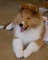 typical puppy.jpg