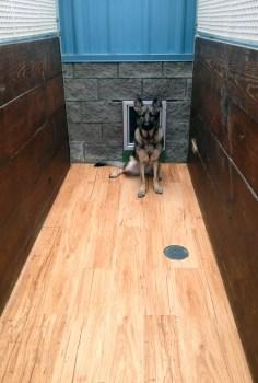 Outside of Dog Kennel