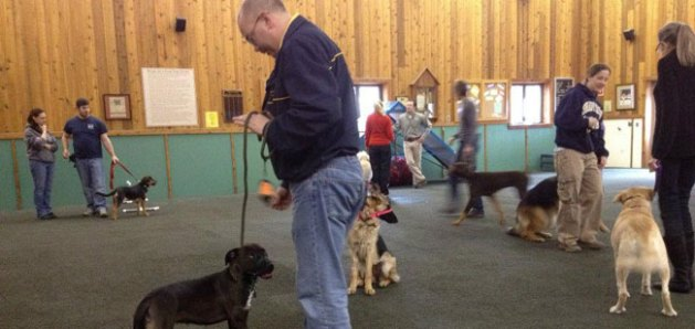 Maintenance Dog Training Class
