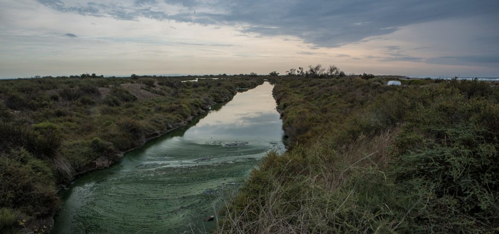 Camargue - Entwässerungkanal bei Saintes-Maries