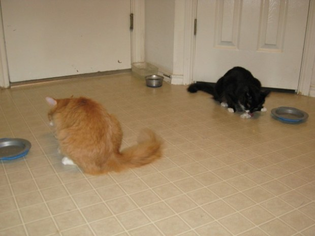 Wilbur and Dusty eating