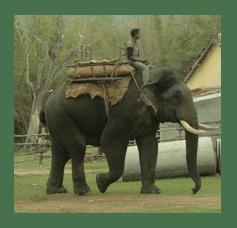 Elephant and Rider