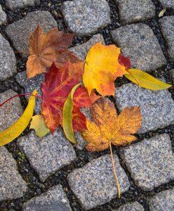 Es ist Herbst geworden. Lina hat bunte Blätter gesammelt.