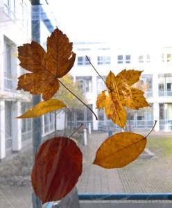 Blätter am Fenster.