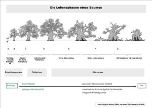 Wenn Bäume alt werden