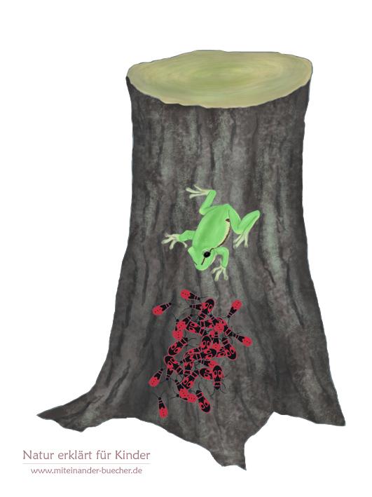 Feuerwanzen lieben Linden - aus Lauri Laubfrosch erkundet die Bäume