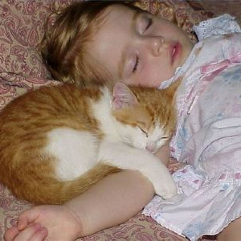 ... cat allergies babies 800x800 An Interesting Study On Allergies To Cats