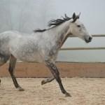 Mehr Pferde-Stärken  – Soziale Kompetenz in der Führung