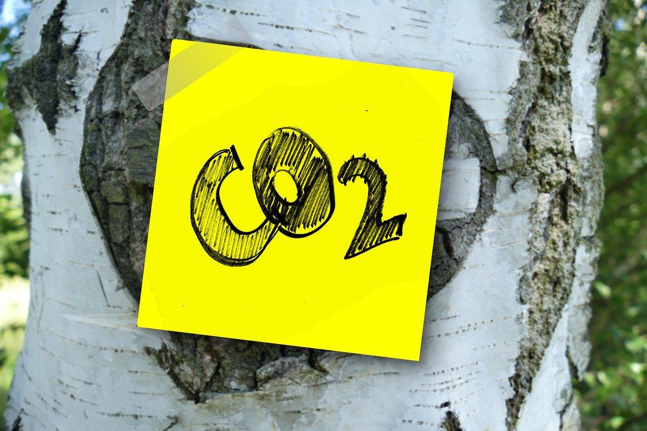 Mit Biokohlenstoff gegen den Klimawandel