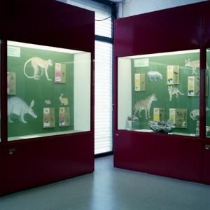Museo Civico di Scienze Naturali Malmerendi
