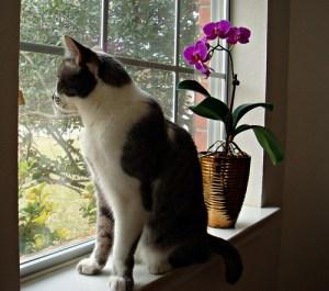 gato-en-la-ventana