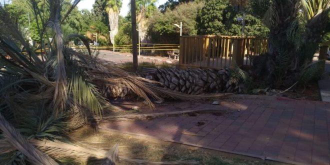 עץ דקל גדול קרס בקיבוץ בשרון ופגע ב-2 ילדות, מצבן בינוני וקל