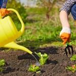 Helpful Summer Gardening Ideas