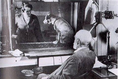 """""""Ο σκύλος του Παβλόφ"""". Το πείραμα που έφερε την επανάσταση στην ψυχολογία. Ο διάσημος Παβλόφ βασάνιζε τα σκυλιά του και μπορούσε να κατηγορεί ανοικτά τους μπολσεβίκους, χωρίς συνέπειες"""