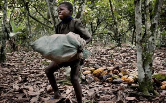 """""""Όταν ο κόσμος τρώει σοκολάτα, τρώει τη σάρκα μου"""". Η μαρτυρία ενός παιδιού σκλάβου στις φυτείες που προμηθεύουν κακάο τις βιομηχανίες. Όσα παιδιά επιχείρησαν να αποδράσουν ξυλοκοπήθηκαν ανελέητα"""