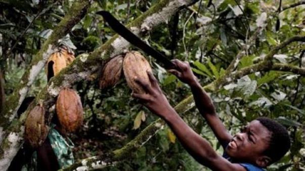 Είναι πράγματι τρομακτικό να σκεφτεί κανείς ότι ένα μεγάλο μέρος της γλυκιάς σοκολάτας που απολαμβάνουμε σήμερα παράγεται μέσα από τη σκληρή εργασία παιδιών που εργάζονται ως σκλάβοι