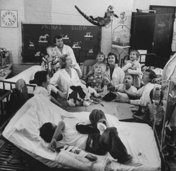 Παιδιά και νοσοκόμες παρακολουθούν ένα ρακούν που κρέμεται από τον τοίχο, ενώ πάνω στο τραπέζι είναι ξαπλωμένα ένα μοσχαράκι και ένα γουρουνάκι.