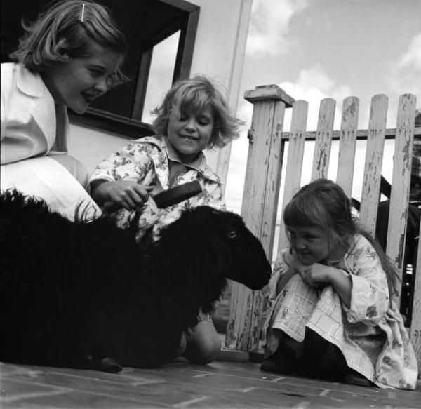 Τα κορίτσια χτένιζαν ένα μαύρο πρόβατο