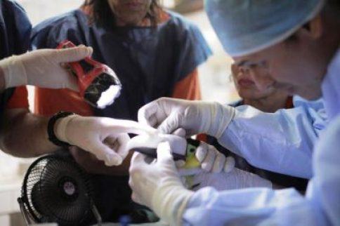 ο κτηνίατρος τοποθετεί το προσθετικό 3D ράμφος στο Γκρέσια