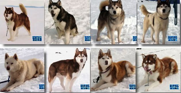 Τα ονόματα των σκυλιών ήταν τα εξής: Μάγια, γέρο - Τζακ, Μαξ, Ντιούι, Τρούμαν, Σάντοου και Μπακ.