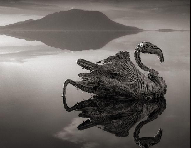 """Το απόκοσμο θέαμα με τα """"μαρμαρωμένα"""" πτηνά. Που βρίσκεται η κόκκινη λίμνη που σκοτώνει όποιο ζώο πέσει στα νερά της. Γιατί επιβιώνει μόνο ένα είδος ψαριού"""