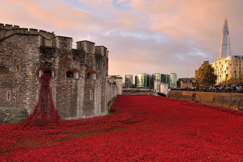 """Γιατί οι παπαρούνες έγιναν σύμβολο μνήμης των νεκρών του Α' Παγκοσμίου Πολέμου. Το συγκινητικό ποίημα του νοσοκόμου που έχασε τον συμπολεμιστή του. Τι αναφέρει ο Στρατής Μυριβήλης στη """"Ζωή εν Τάφω"""""""