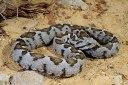 Τα φίδια της Ελλάδας. Χρήσιμα όσο δεν φανταζόμαστε. Γιατί παλιά είχε ένα κάθε σπίτι του χωριού