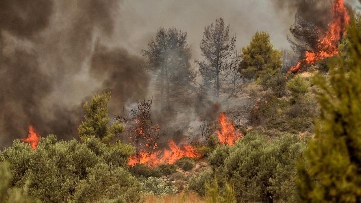 Ο άνθρωπος που είχε συλληφθεί ως ο εμπρηστής του Κρυονερίου εικονίζεται να σβήνει φωτιές και να σώζει άλογα στην Βαρυμπόμπη