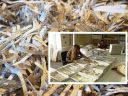 Οι γυναίκες του παζλ. Πως ένωσαν 600 εκατ. χαρτάκια από κομματιασμένα έγγραφα και αποκάλυψαν την δράση της Στάζι