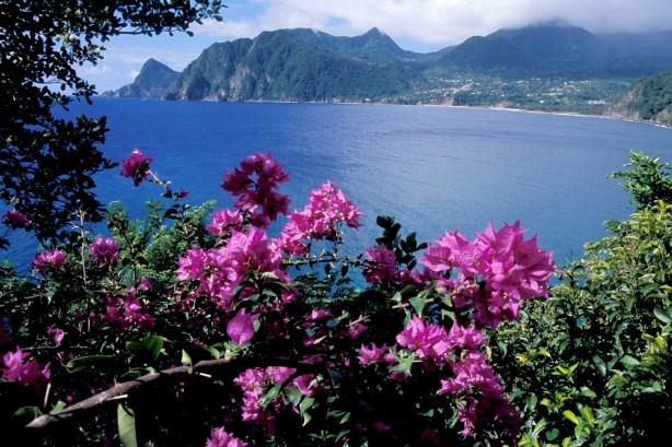 dominica insula de vis
