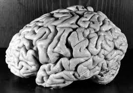 creierul ,organul suprem de pe Terra