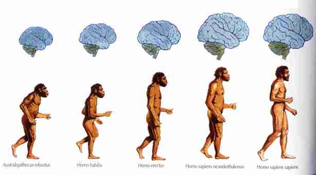 evolutia speciei umane