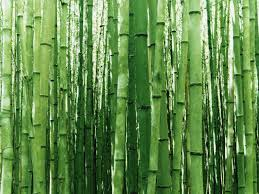 beneficiile bambusului împușcă pierderi în greutate