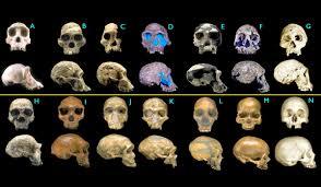 Cateva teorii fanteziste despre evolutia omului.jpg-