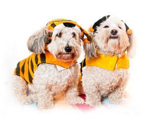 Unhappy Pups