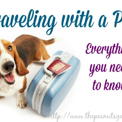 Traveling with a Pet – Everything You Need To Know