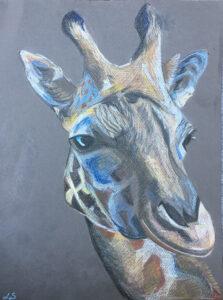 Giraffe - €50,- / Kleurpotlood op papier 24 x 32