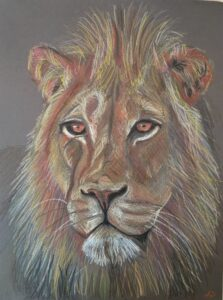 Leeuw - €50,- / Kleurpotlood op papier 24 x 32