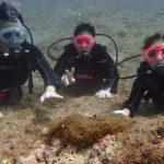 下地島でボート体験ダイビング