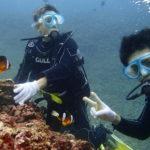 宮古島 伊良部島Wアーチで体験ダイビング