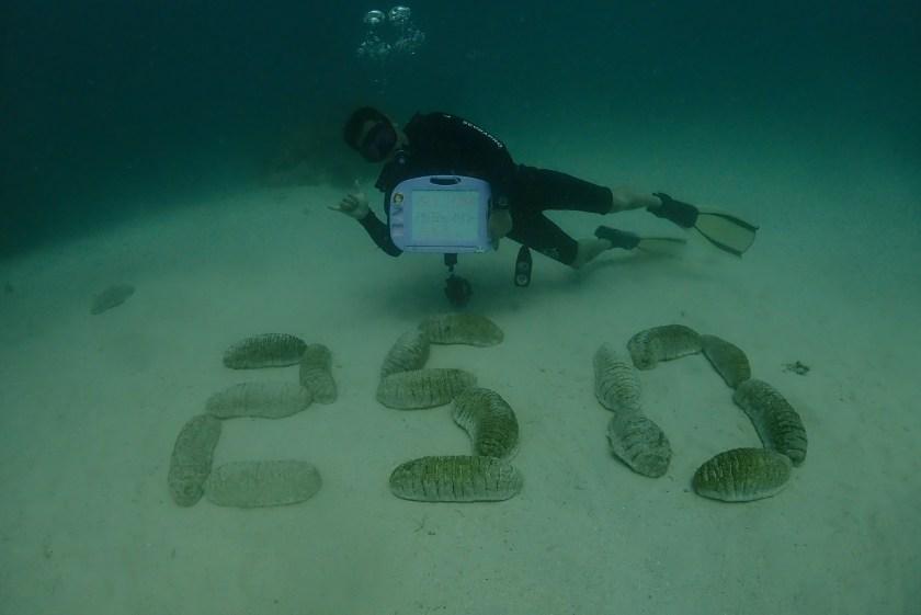 オーストラリア グレートバリアリーフ オーシャンクエスト 250本記念ダイブ