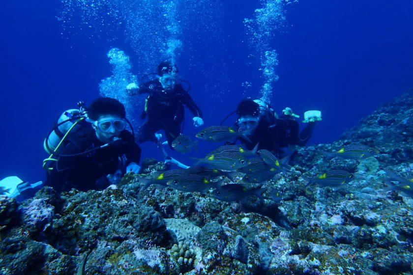 宮古島 サンゴホールで体験ダイビング